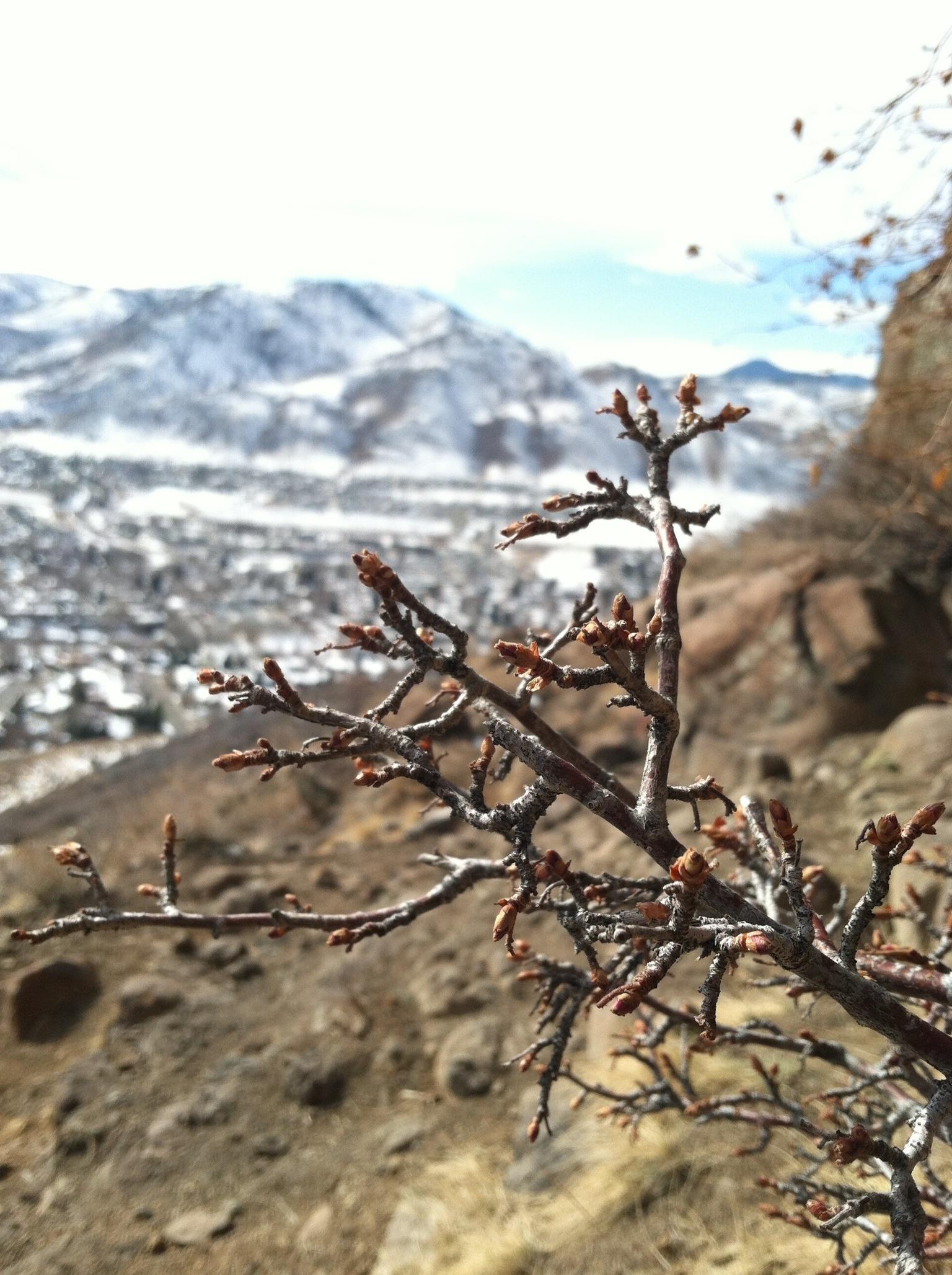 Descriptive essay on mountain climbing